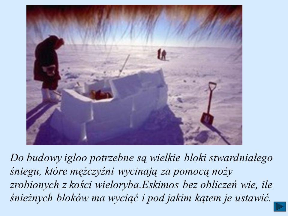 Zimowe mieszkanie Anaruka to igloo. Można je wybudować w ciągu niecałej godziny. Budowa igloo, to dla Eskimosa ważny, uroczysty obrządek. Nie każdy śn