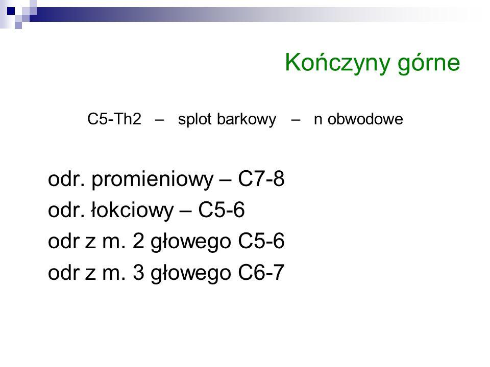 Kończyny górne C5-Th2 – splot barkowy – n obwodowe odr. promieniowy – C7-8 odr. łokciowy – C5-6 odr z m. 2 głowego C5-6 odr z m. 3 głowego C6-7