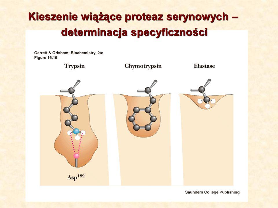 Kieszenie wiążące proteaz serynowych – determinacja specyficzności determinacja specyficzności