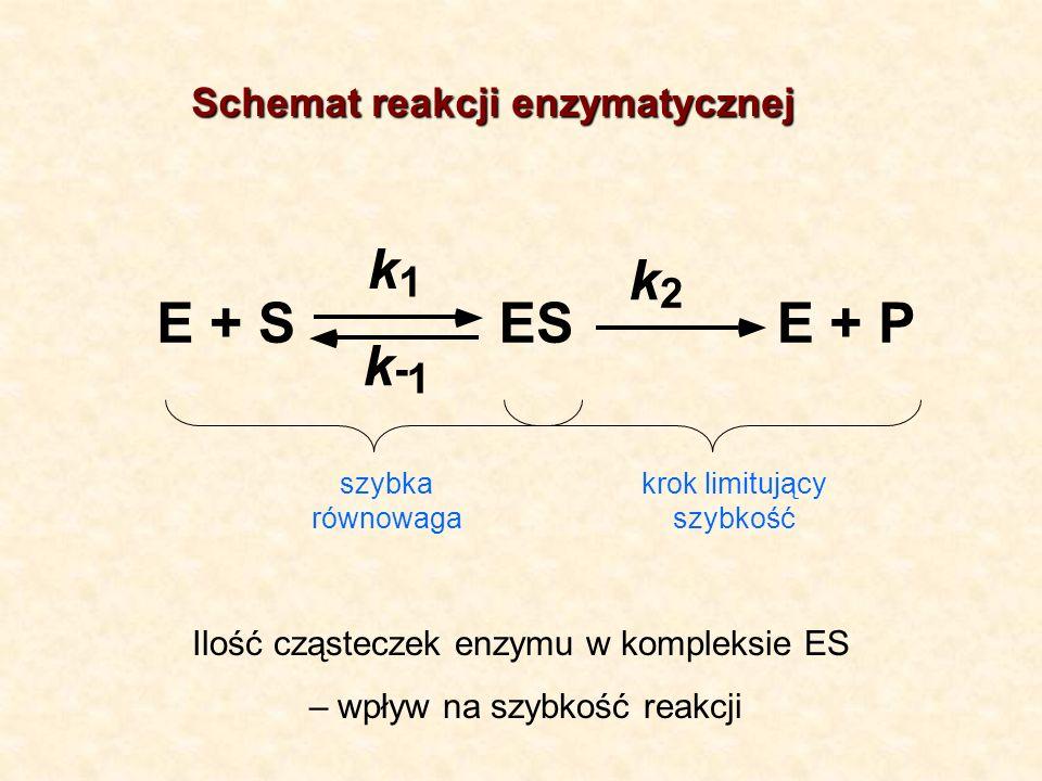 PE + S ES E + k 1 k 2 k - 1 szybka równowaga krok limitujący szybkość Ilość cząsteczek enzymu w kompleksie ES – wpływ na szybkość reakcji Schemat reak