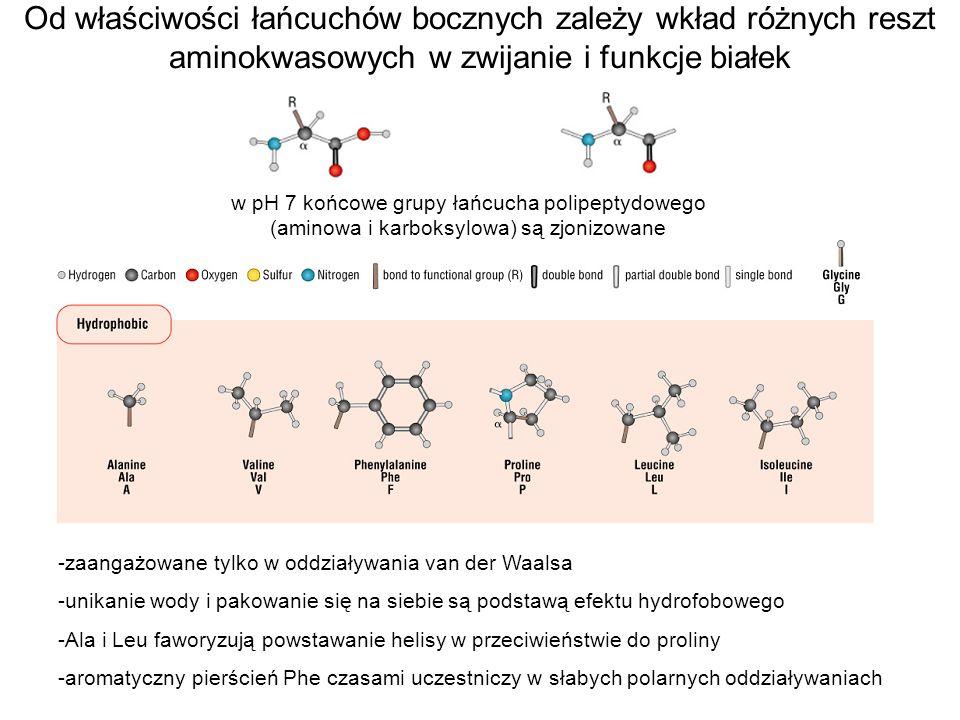 w pH 7 końcowe grupy łańcucha polipeptydowego (aminowa i karboksylowa) są zjonizowane -zaangażowane tylko w oddziaływania van der Waalsa -unikanie wod