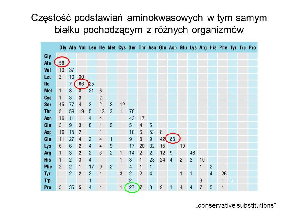 Częstość podstawień aminokwasowych w tym samym białku pochodzącym z różnych organizmów conservative substitutions