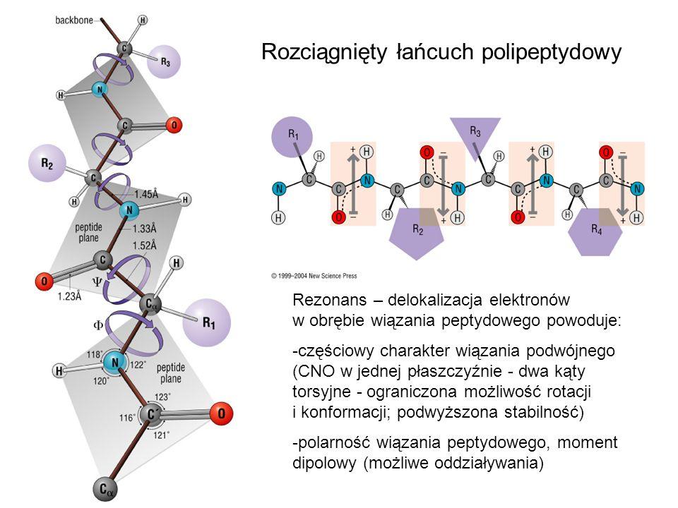Rozciągnięty łańcuch polipeptydowy Rezonans – delokalizacja elektronów w obrębie wiązania peptydowego powoduje: -częściowy charakter wiązania podwójne