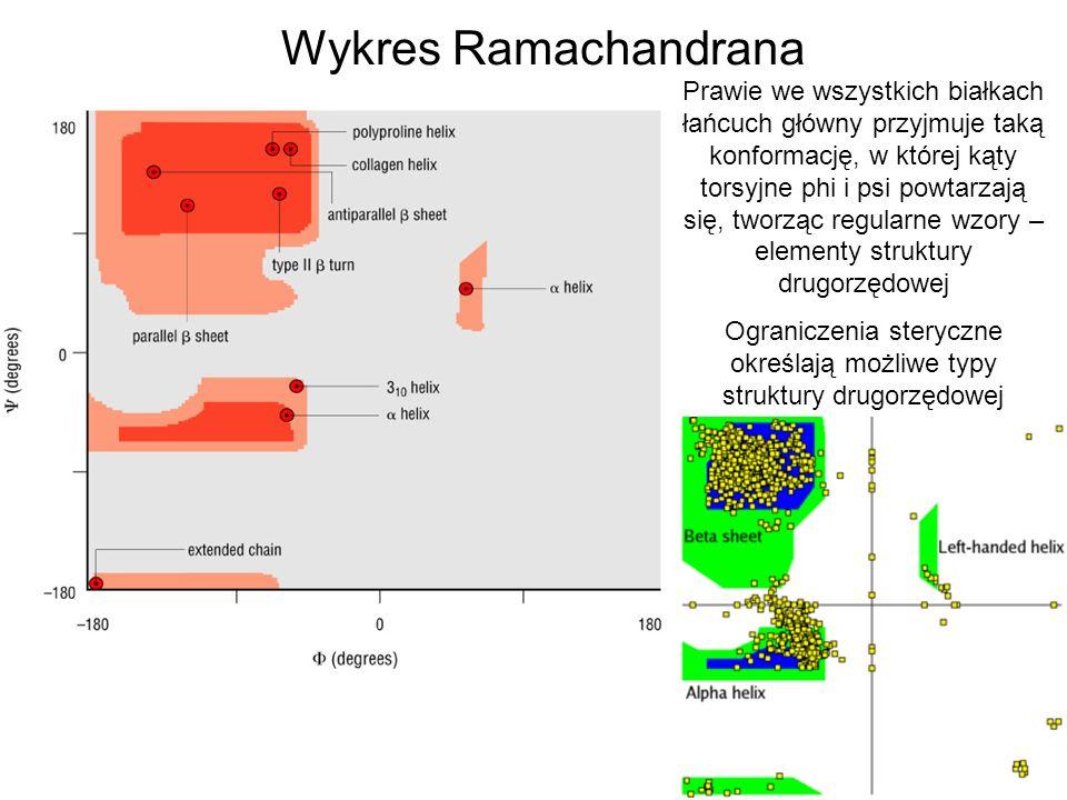 Wykres Ramachandrana Prawie we wszystkich białkach łańcuch główny przyjmuje taką konformację, w której kąty torsyjne phi i psi powtarzają się, tworząc