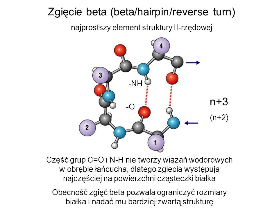 Zgięcie beta (beta/hairpin/reverse turn) najprostszy element struktury II-rzędowej -NH -O n+3 (n+2) Część grup C=O i N-H nie tworzy wiązań wodorowych