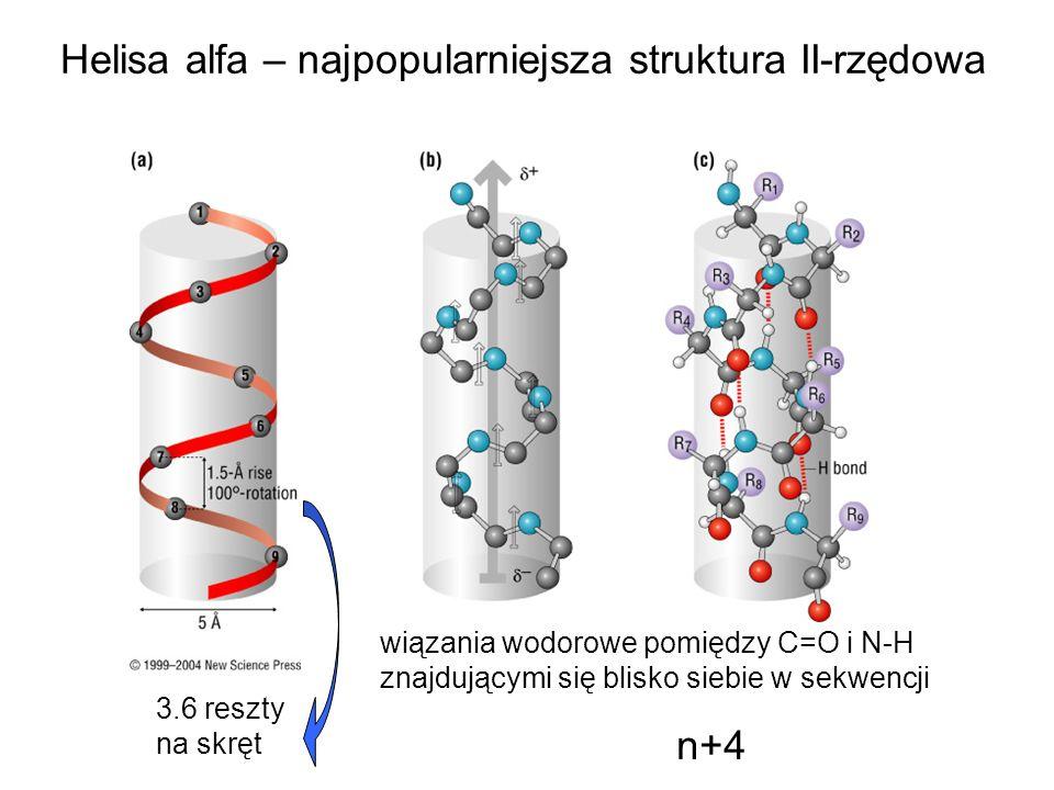 Helisa alfa – najpopularniejsza struktura II-rzędowa wiązania wodorowe pomiędzy C=O i N-H znajdującymi się blisko siebie w sekwencji n+4 3.6 reszty na