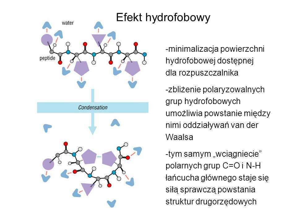 -minimalizacja powierzchni hydrofobowej dostępnej dla rozpuszczalnika -zbliżenie polaryzowalnych grup hydrofobowych umożliwia powstanie między nimi od
