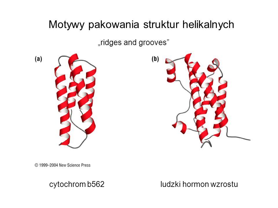 Motywy pakowania struktur helikalnych cytochrom b562ludzki hormon wzrostu ridges and grooves