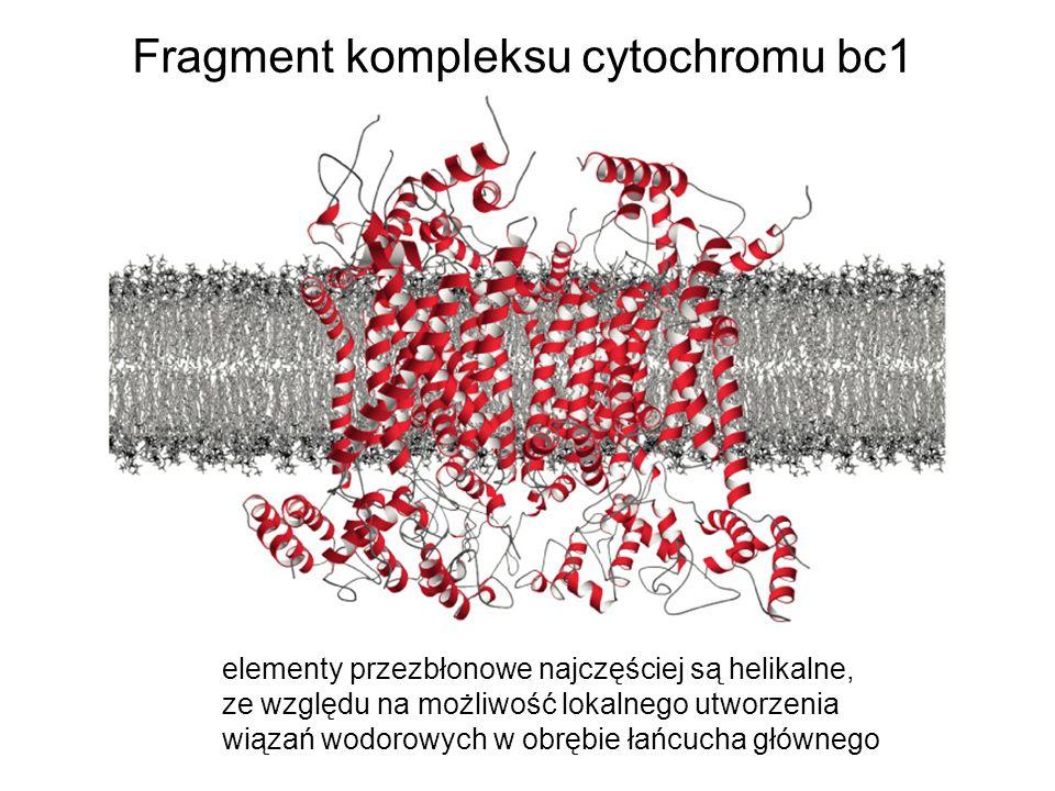 Fragment kompleksu cytochromu bc1 elementy przezbłonowe najczęściej są helikalne, ze względu na możliwość lokalnego utworzenia wiązań wodorowych w obr
