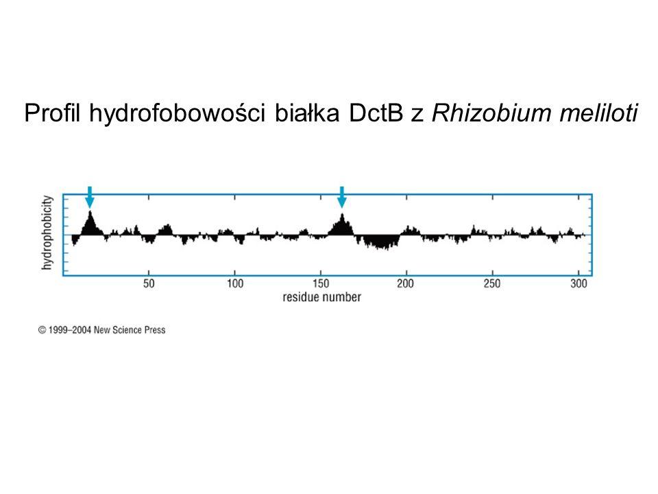 Profil hydrofobowości białka DctB z Rhizobium meliloti