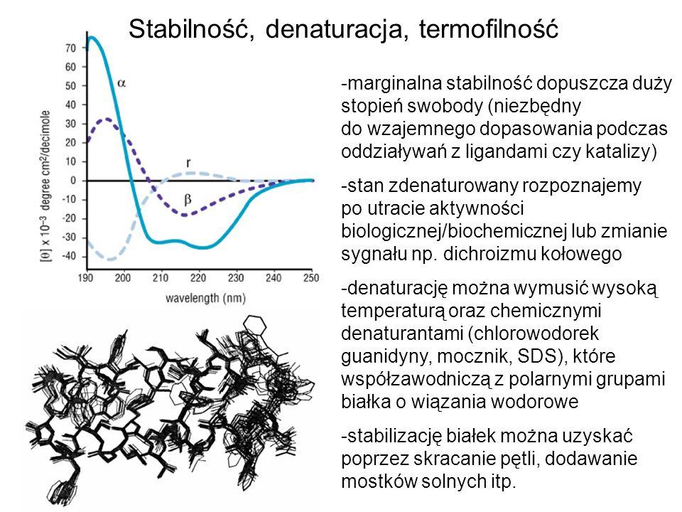 Stabilność, denaturacja, termofilność -marginalna stabilność dopuszcza duży stopień swobody (niezbędny do wzajemnego dopasowania podczas oddziaływań z