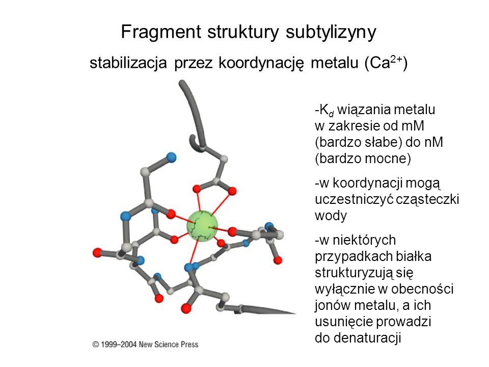 Fragment struktury subtylizyny stabilizacja przez koordynację metalu (Ca 2+ ) -K d wiązania metalu w zakresie od mM (bardzo słabe) do nM (bardzo mocne