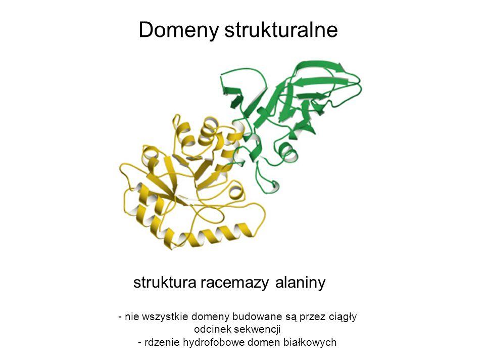 struktura racemazy alaniny - nie wszystkie domeny budowane są przez ciągły odcinek sekwencji - rdzenie hydrofobowe domen białkowych Domeny strukturaln