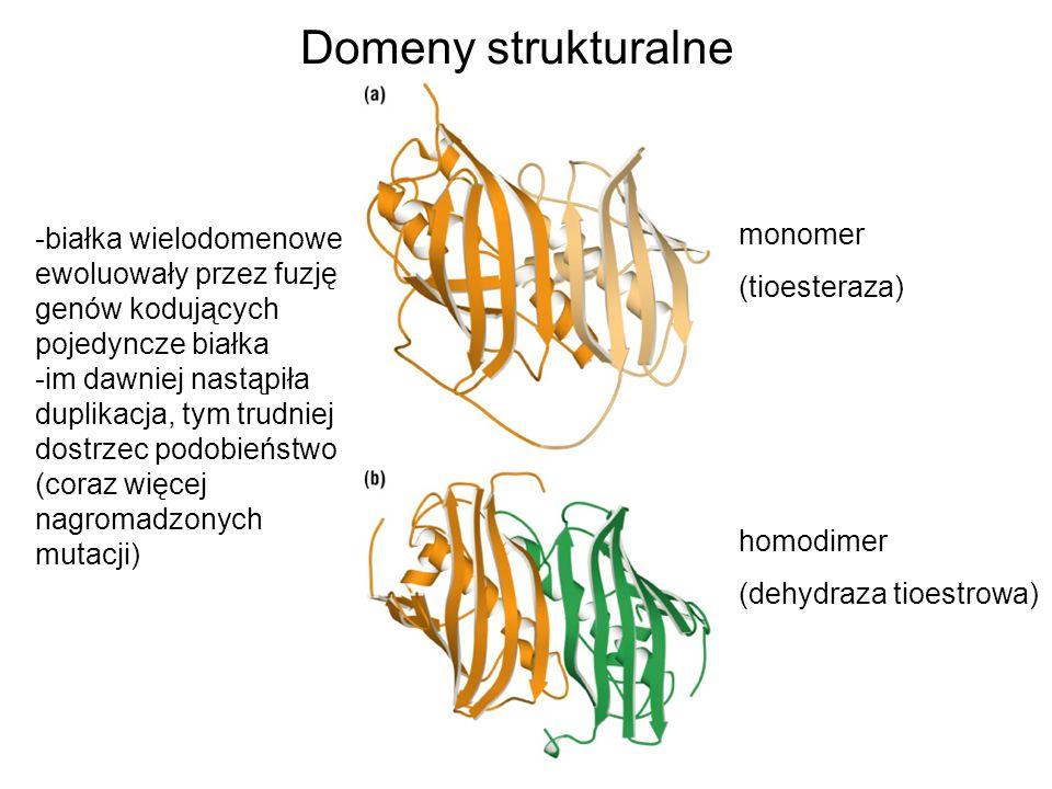 homodimer (dehydraza tioestrowa) monomer (tioesteraza) -białka wielodomenowe ewoluowały przez fuzję genów kodujących pojedyncze białka -im dawniej nas