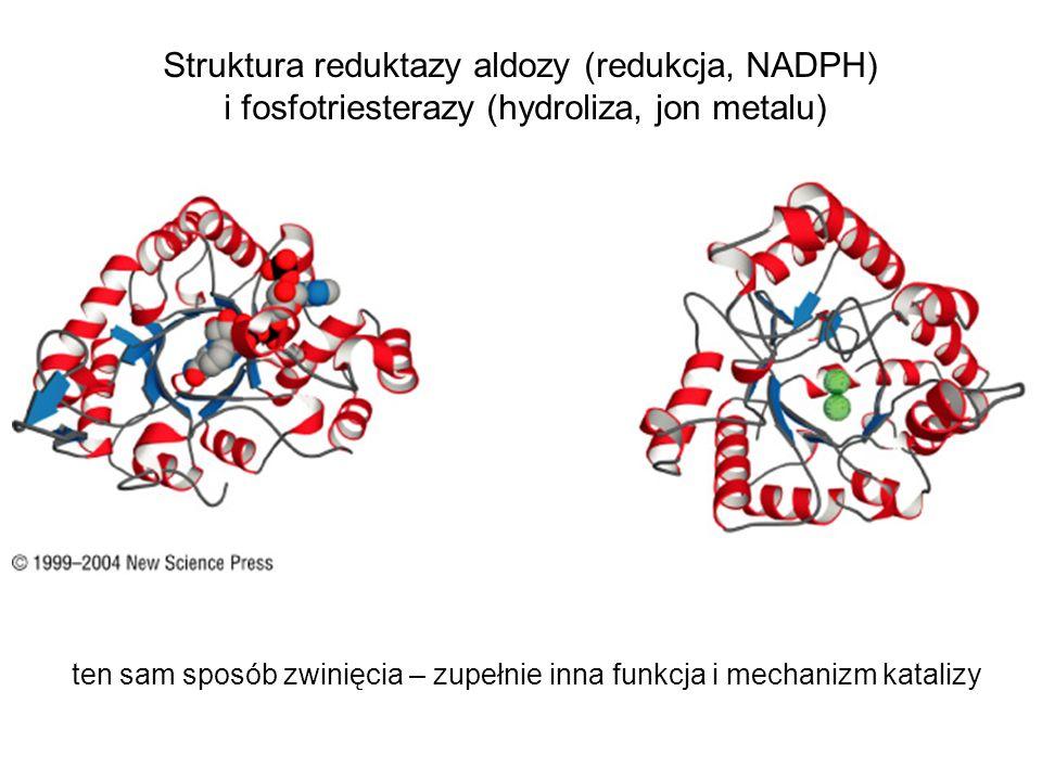 Struktura reduktazy aldozy (redukcja, NADPH) i fosfotriesterazy (hydroliza, jon metalu) ten sam sposób zwinięcia – zupełnie inna funkcja i mechanizm k