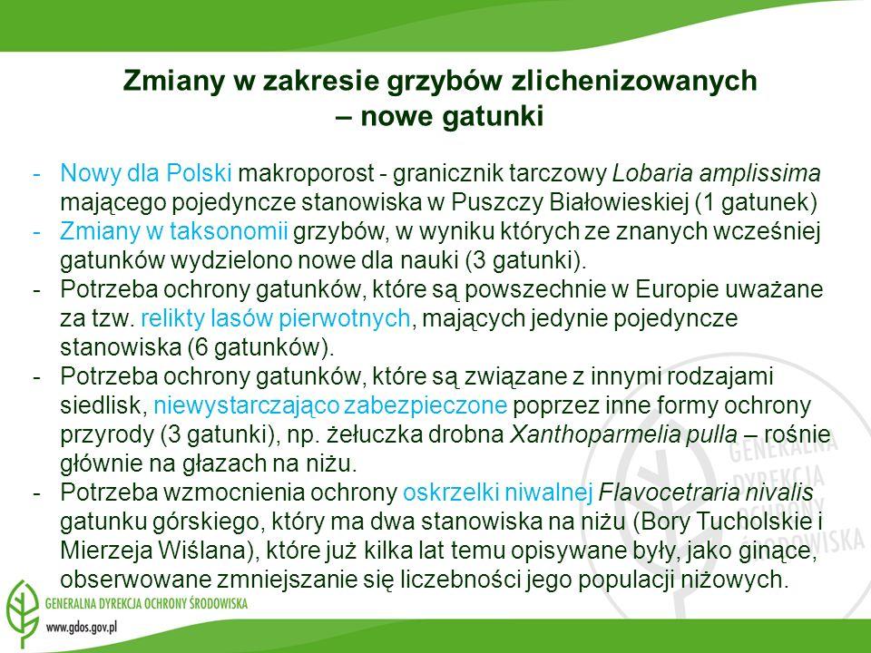 Zmiany w zakresie grzybów zlichenizowanych – nowe gatunki -Nowy dla Polski makroporost - granicznik tarczowy Lobaria amplissima mającego pojedyncze st