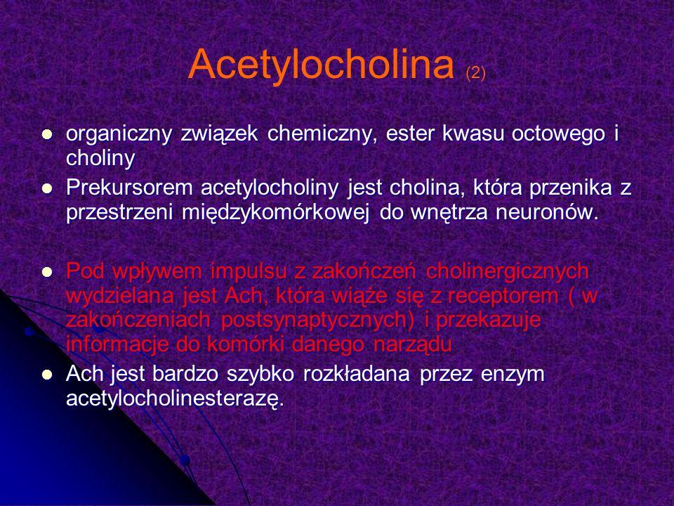Acetylocholina (2) organiczny związek chemiczny, ester kwasu octowego i choliny organiczny związek chemiczny, ester kwasu octowego i choliny Prekursorem acetylocholiny jest cholina, która przenika z przestrzeni międzykomórkowej do wnętrza neuronów.