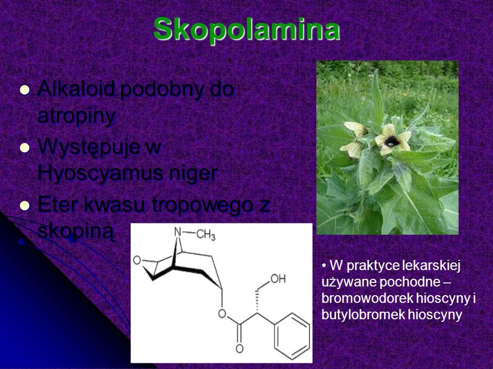 Skopolamina Alkaloid podobny do atropiny Alkaloid podobny do atropiny Występuje w Hyoscyamus niger Występuje w Hyoscyamus niger Eter kwasu tropowego z skopiną Eter kwasu tropowego z skopiną W praktyce lekarskiej używane pochodne – bromowodorek hioscyny i butylobromek hioscyny