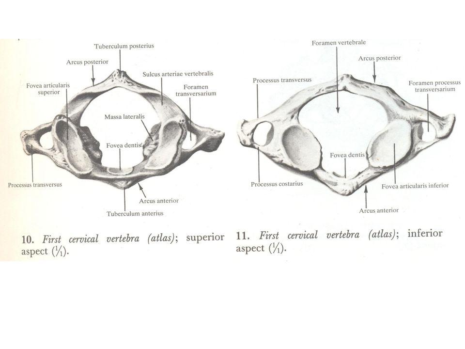 Uszkodzenia kręgosłupa szyjnego