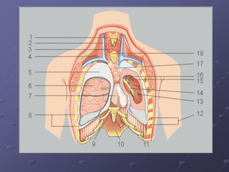 Stłuczenie płuca.