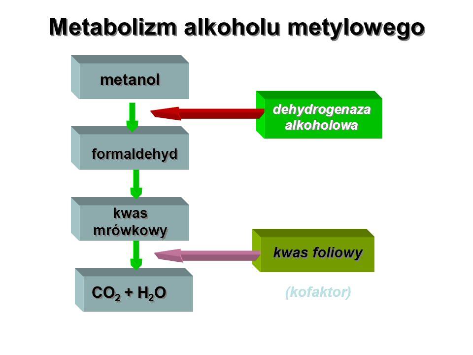Metabolizm alkoholu metylowego metanol formaldehyd kwas mrówkowy CO 2 + H 2 O dehydrogenaza alkoholowa kwas foliowy (kofaktor)