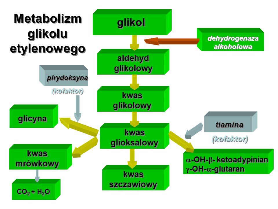 glikol aldehyd glikolowy kwas glikolowy kwas glioksalowy glicyna kwas mrówkowy kwas szczawiowy -OH- - ketoadypinian -OH- -glutaran CO 2 + H 2 O dehydr