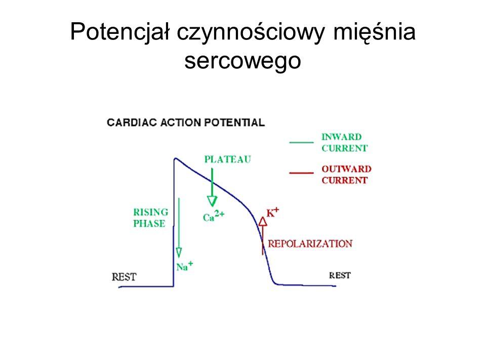 Leki stabilizujące błony komórkowe Działają poprzez blokowanie kanałów sodowych, podobnie jak leki znieczulające miejscowo, działają w fazie 0 Hamują szerzenie się potencjału czynnościowego