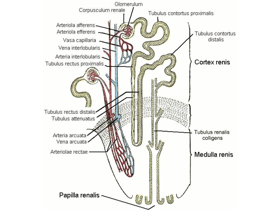 TIAZYDY - leki moczopędne o średniej sile działania wskazania: - nadciśnienie tętnicze - zastoinowa niewydolność krążenia (CHF) - inne obrzęki (m.in.