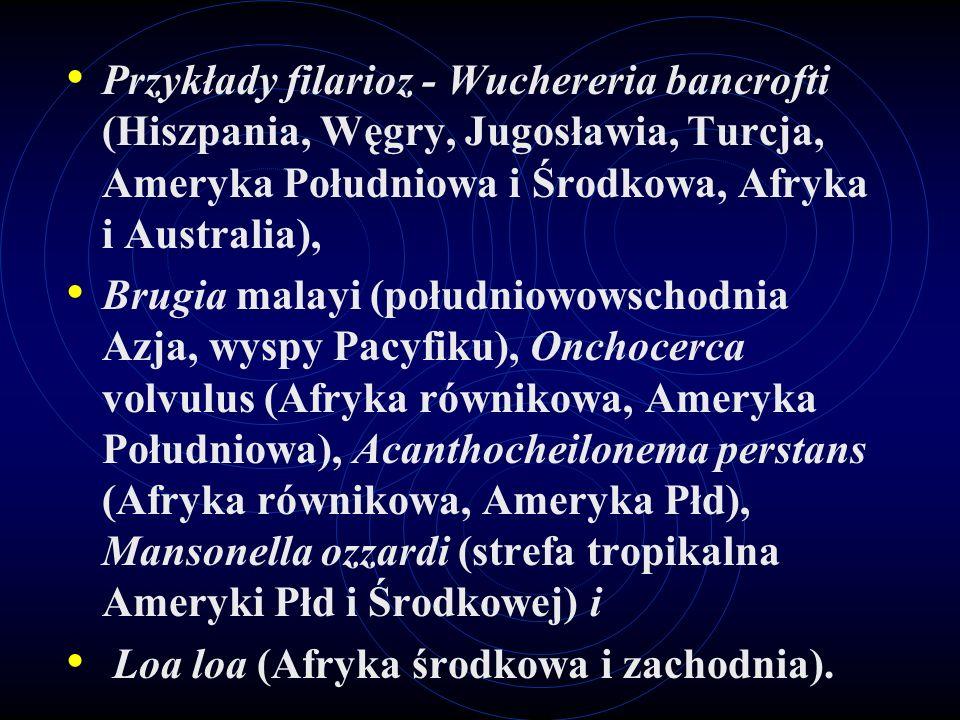 Przykłady filarioz - Wuchereria bancrofti (Hiszpania, Węgry, Jugosławia, Turcja, Ameryka Południowa i Środkowa, Afryka i Australia), Brugia malayi (po