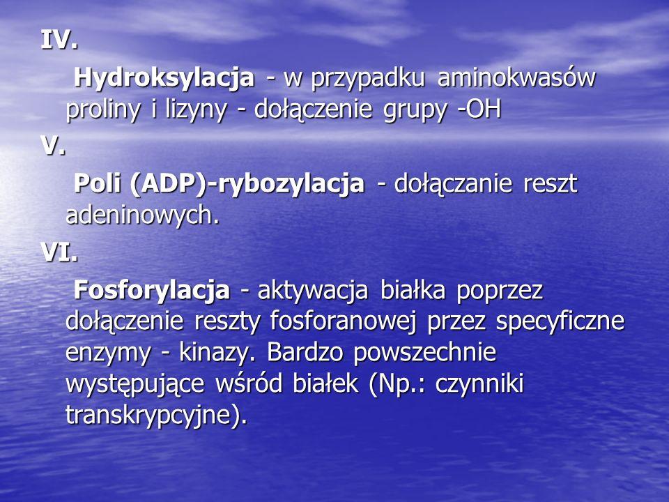 IV. Hydroksylacja - w przypadku aminokwasów proliny i lizyny - dołączenie grupy -OH Hydroksylacja - w przypadku aminokwasów proliny i lizyny - dołącze