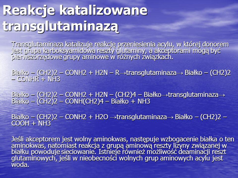 Reakcje katalizowane transglutaminazą Transglutaminaza katalizuje reakcję przeniesienia acylu, w której donorem jest grupa karboksyamidowa reszty glut