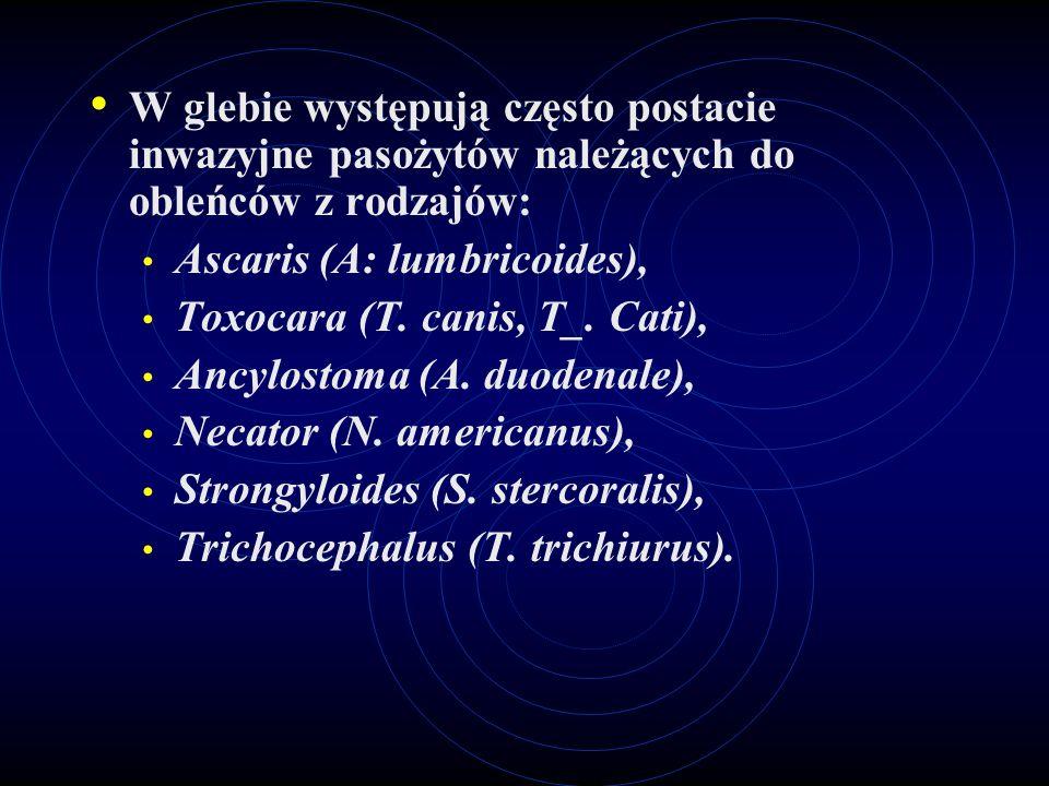 W glebie występują często postacie inwazyjne pasożytów należących do obleńców z rodzajów: Ascaris (A: lumbricoides), Toxocara (T. canis, T_. Cati), An