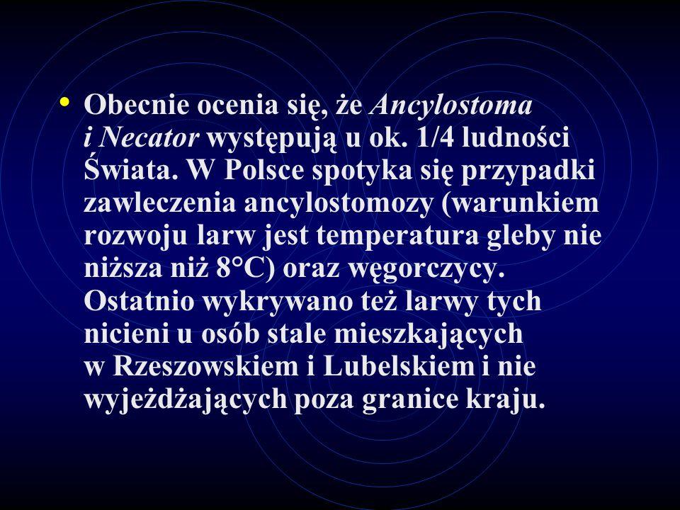 Obecnie ocenia się, że Ancylostoma i Necator występują u ok. 1/4 ludności Świata. W Polsce spotyka się przypadki zawleczenia ancylostomozy (warunkiem