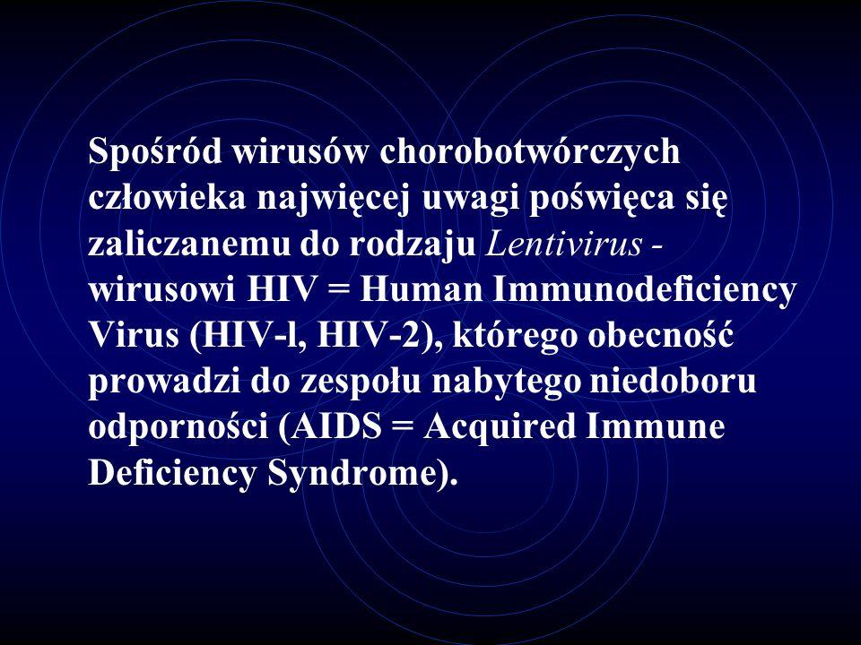 Spośród wirusów chorobotwórczych człowieka najwięcej uwagi poświęca się zaliczanemu do rodzaju Lentivirus - wirusowi HIV = Human Immunodeficiency Viru