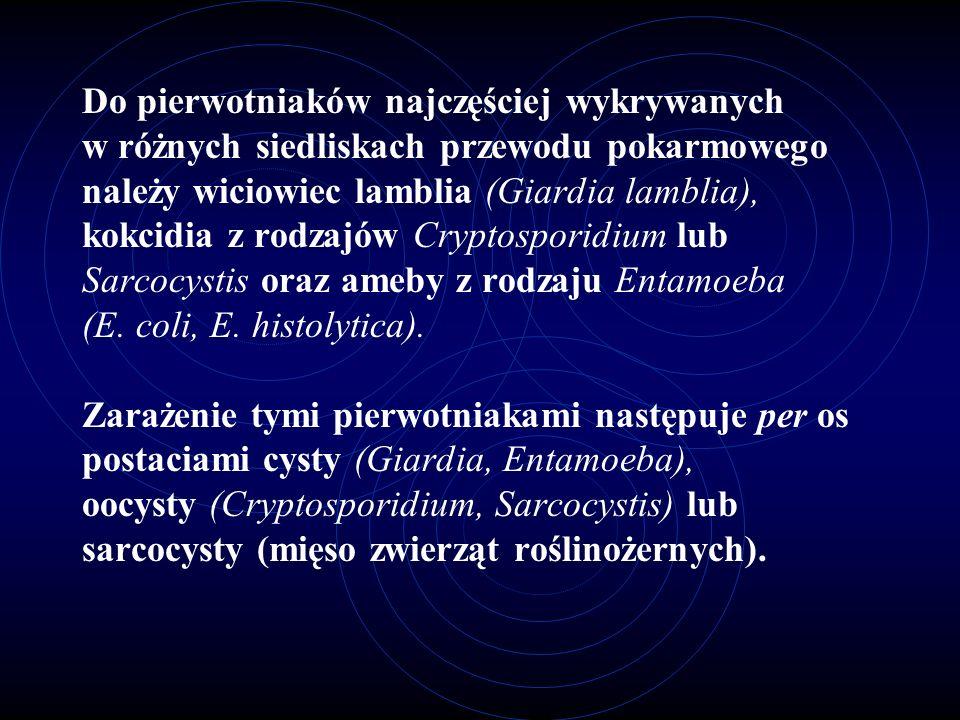Do pierwotniaków najczęściej wykrywanych w różnych siedliskach przewodu pokarmowego należy wiciowiec lamblia (Giardia lamblia), kokcidia z rodzajów Cr