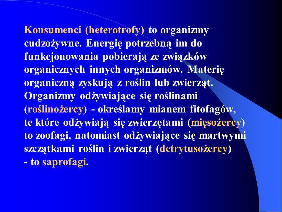 Konsumenci (heterotrofy) to organizmy cudzożywne. Energię potrzebną im do funkcjonowania pobierają ze związków organicznych innych organizmów. Materię