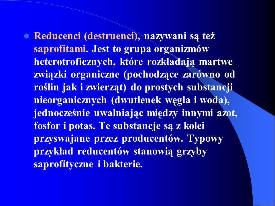 Reducenci (destruenci), nazywani są też saprofitami. Jest to grupa organizmów heterotroficznych, które rozkładają martwe związki organiczne (pochodząc