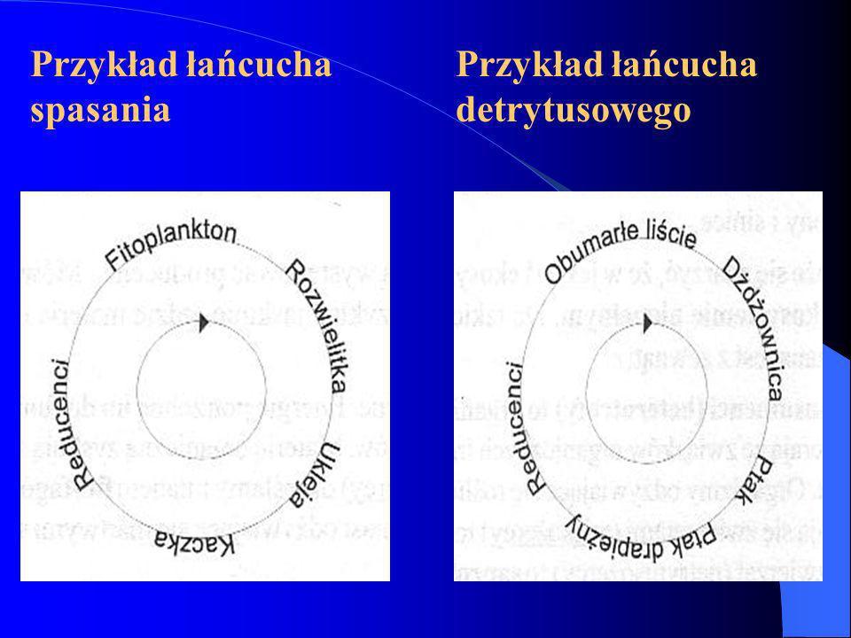 Przykład łańcucha spasania Przykład łańcucha detrytusowego