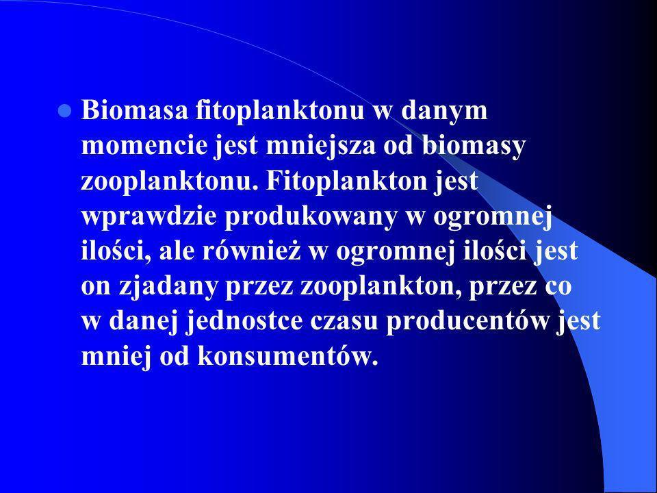 Biomasa fitoplanktonu w danym momencie jest mniejsza od biomasy zooplanktonu. Fitoplankton jest wprawdzie produkowany w ogromnej ilości, ale również w
