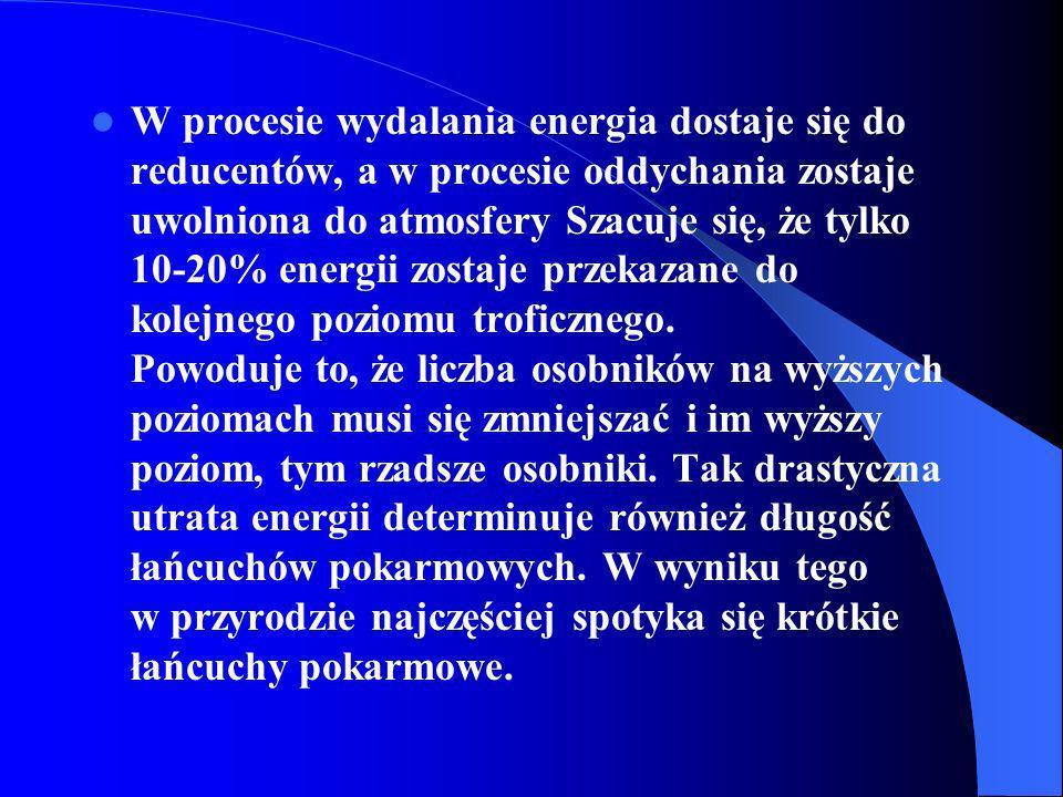 W procesie wydalania energia dostaje się do reducentów, a w procesie oddychania zostaje uwolniona do atmosfery Szacuje się, że tylko 10-20% energii zo