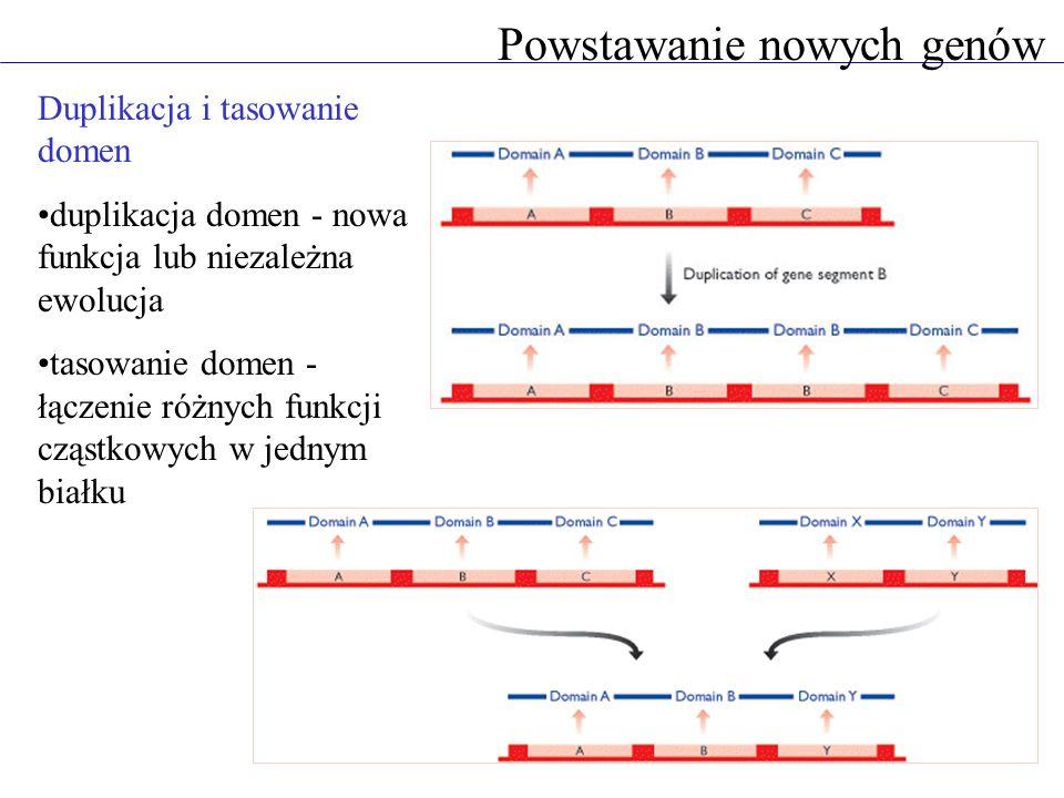 Duplikacja i tasowanie domen duplikacja domen - nowa funkcja lub niezależna ewolucja tasowanie domen - łączenie różnych funkcji cząstkowych w jednym białku Powstawanie nowych genów