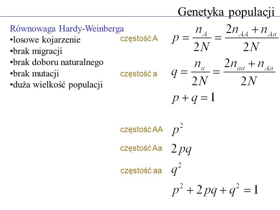 Równowaga Hardy-Weinberga losowe kojarzenie brak migracji brak doboru naturalnego brak mutacji duża wielkość populacji Genetyka populacji częstość AA częstość Aa częstość aa częstość a częstość A