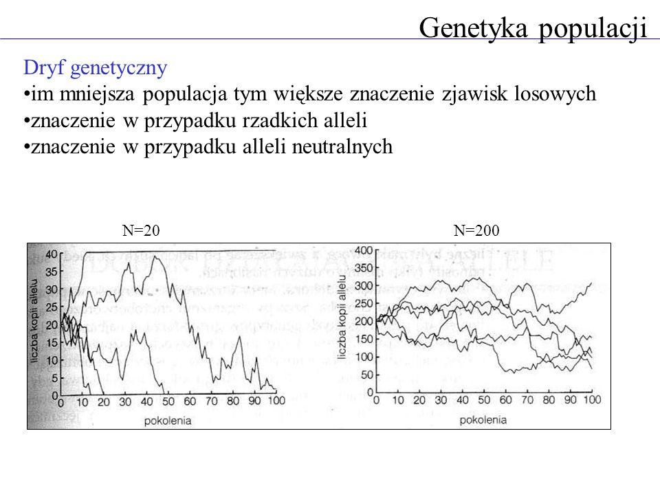 Dryf genetyczny im mniejsza populacja tym większe znaczenie zjawisk losowych znaczenie w przypadku rzadkich alleli znaczenie w przypadku alleli neutralnych Genetyka populacji N=20 N=200