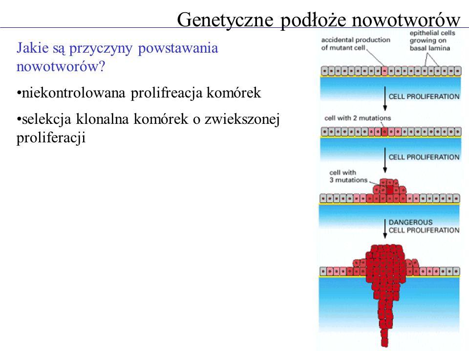 Genetyczne podłoże nowotworów Jakie są przyczyny powstawania nowotworów.