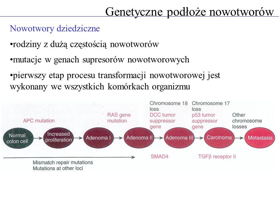 Genetyczne podłoże nowotworów Nowotwory dziedziczne rodziny z dużą częstością nowotworów mutacje w genach supresorów nowotworowych pierwszy etap procesu transformacji nowotworowej jest wykonany we wszystkich komórkach organizmu