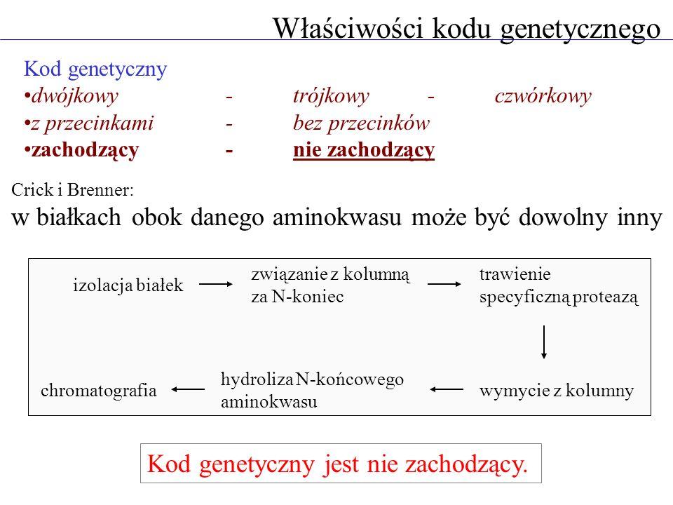 Właściwości kodu genetycznego Kod genetyczny dwójkowy - trójkowy - czwórkowy z przecinkami - bez przecinków zachodzący - nie zachodzący Crick i Brenne