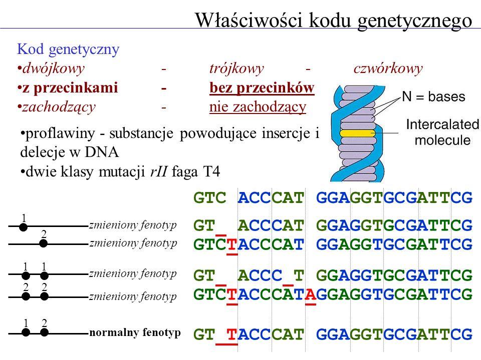Kod genetyczny dwójkowy - trójkowy - czwórkowy z przecinkami - bez przecinków zachodzący - nie zachodzący proflawiny - substancje powodujące insercje