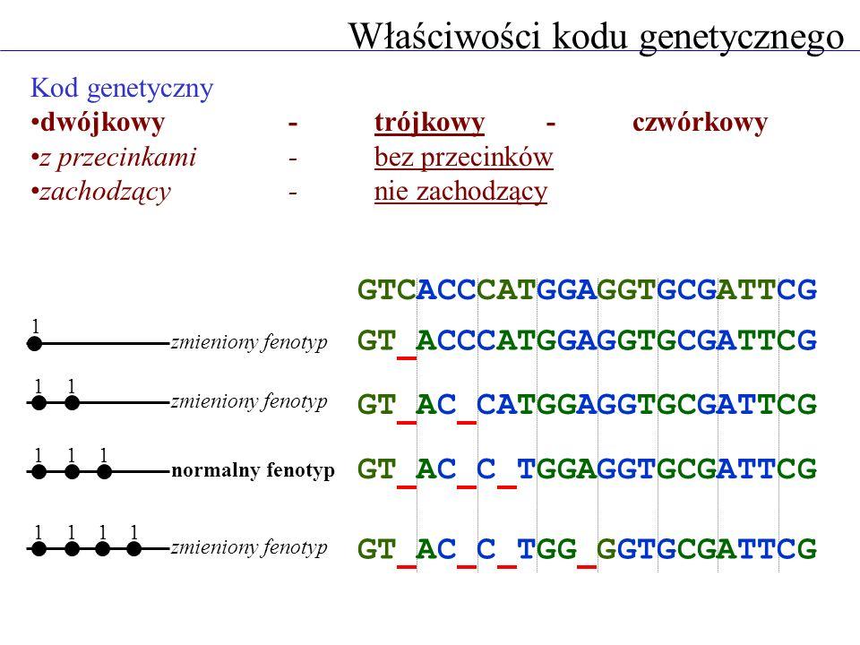 Kod genetyczny dwójkowy - trójkowy - czwórkowy z przecinkami - bez przecinków zachodzący - nie zachodzący 1 11 zmieniony fenotyp GTCACCCATGGAGGTGCGATT