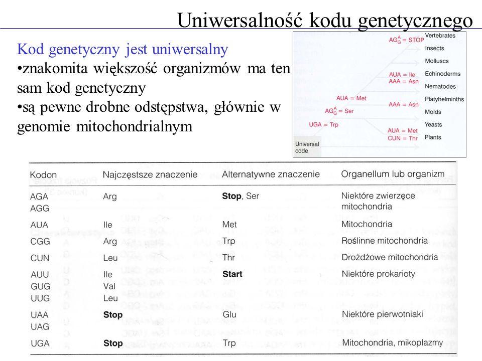 Uniwersalność kodu genetycznego Kod genetyczny jest uniwersalny znakomita większość organizmów ma ten sam kod genetyczny są pewne drobne odstępstwa, g