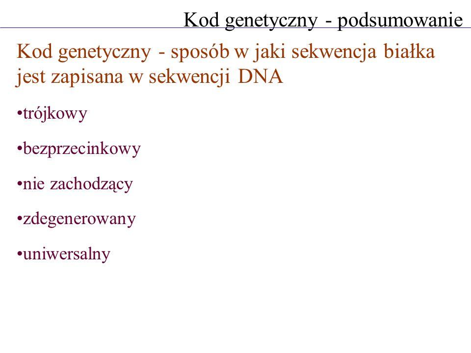 Kod genetyczny - podsumowanie Kod genetyczny - sposób w jaki sekwencja białka jest zapisana w sekwencji DNA trójkowy bezprzecinkowy nie zachodzący zde